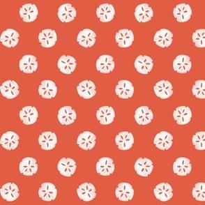 sand dollar - Nantucket Red
