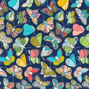 butterflies at night