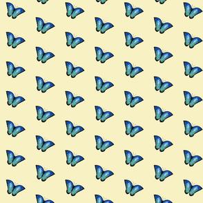 single butterflies