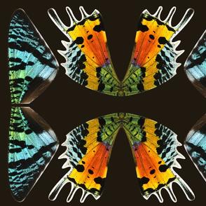 fat quarter sunset moth