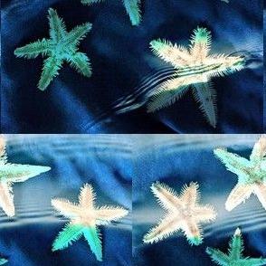 Waves of Starfish