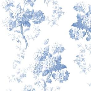 Edwina blueberry on white