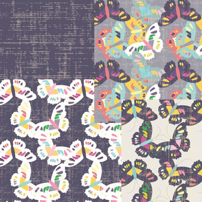 Butterflies - Coordinates