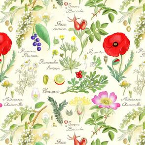 botanical-sketch