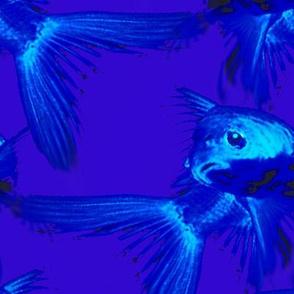 skyfishpattern