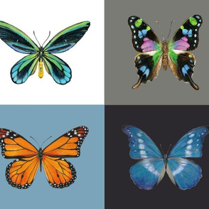 Butterfly Paintings by Angela