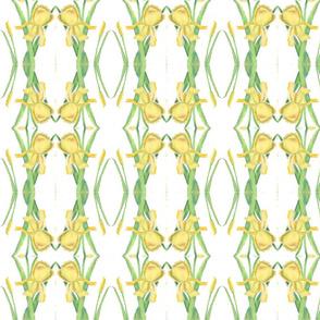 Iris_Yellow