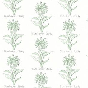 Sunflower Study Green