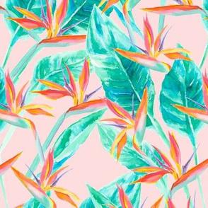 Birds of Paradise Blush