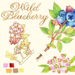 Blueberry Botanical Sketchbook