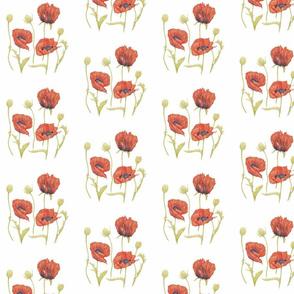 Poppies Plain