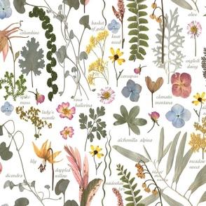 Collectors Garden Sketchbook lg w text