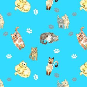 Random Cats Turquoise