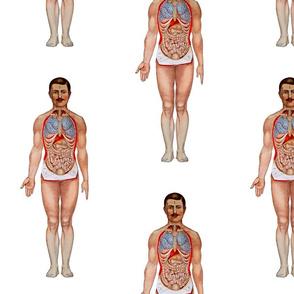 Anatomy Man with Mustache