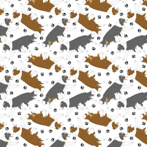 Trotting Border Collies and paw prints - white