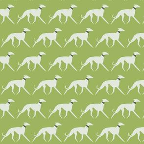 walking sighthounds green