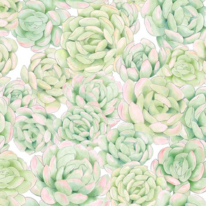 Hand Painted Succulent Wallpaper