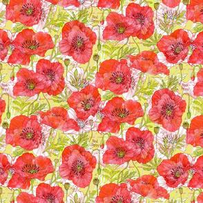 California Poppies Botanical Sketchbook Med16in