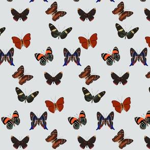 butterflies-ed