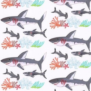 Sharks Dude!