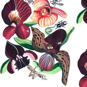 Orchids and Insects