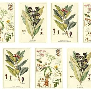 Vintage Spice Botanicals