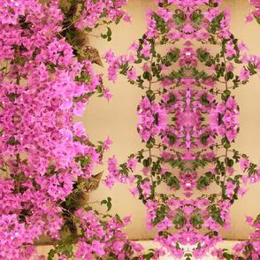 Moroccan Flora & Fauna