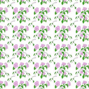 impatiens-color-patternfinal-sm
