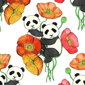 Poppies and Pandas