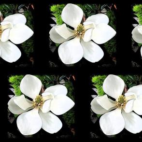 Magnolia Midnight Garden