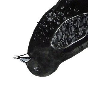A crow named Fair