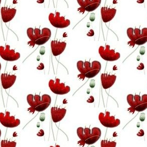 A 2 February 2010 - Red Poppy Landscape white background