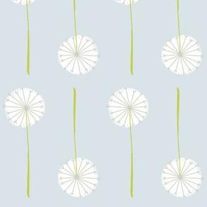 ash dandelion