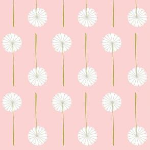 pink_dandelion