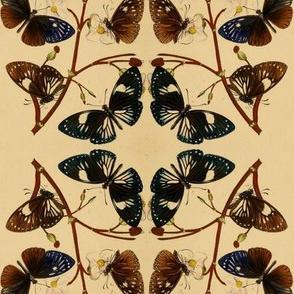 Vintage butterflies