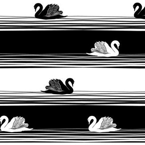 swans in black and white