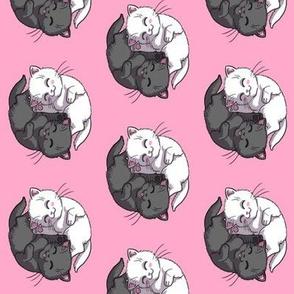 Black And White Yin Yang Kittens on Pink