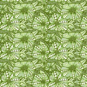 puffy flowers in lime