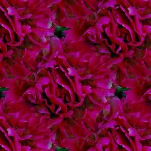 Seamless Magenta Peony Blossoms