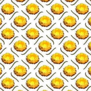 Button-Everlasting Daisy
