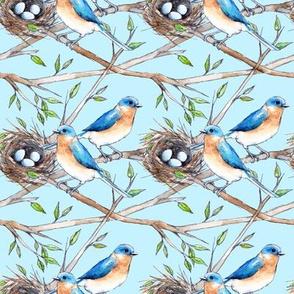 Bluebirds Nest