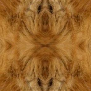 Guinness fur