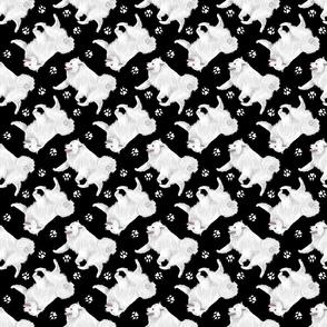 Trotting American Eskimo Dog and paw prints - black