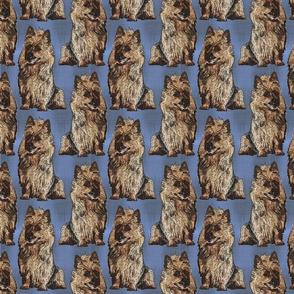 Posing Australian Terriers - blue