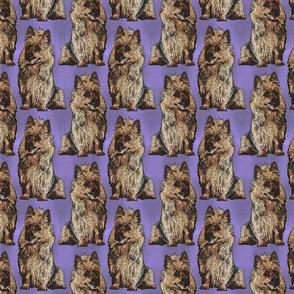 Posing Australian Terriers - purple