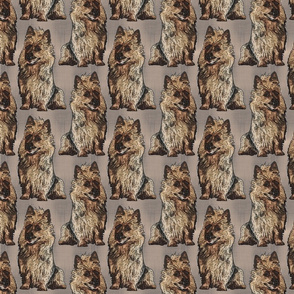 Posing Australian Terriers - brown