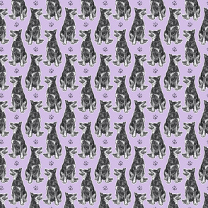 Small sitting Australian cattle dog - paw print purple