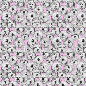 OES_heads_soft_pink