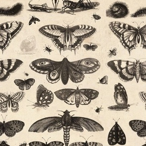 Vintage Insect Fabric, Entomologist's Delight