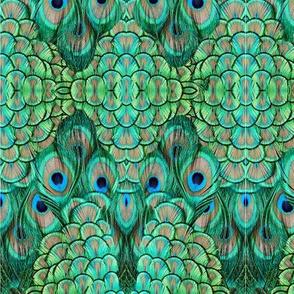 ©2011 peacock-3